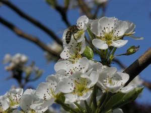 Пролет 2013