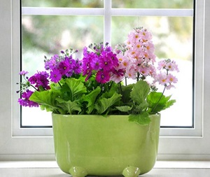 spring-on-balkony1